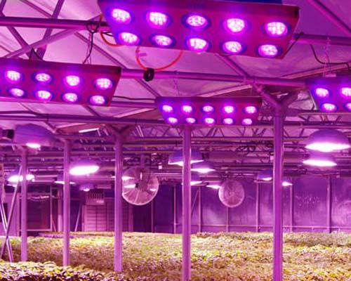 Learnew grow led cob company for promotion