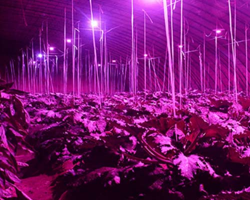 Learnew grow led cob company for promotion-8