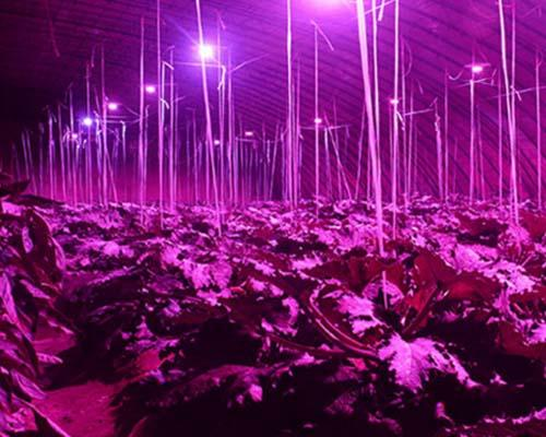 Learnew led cob grow light with good price bulk buy