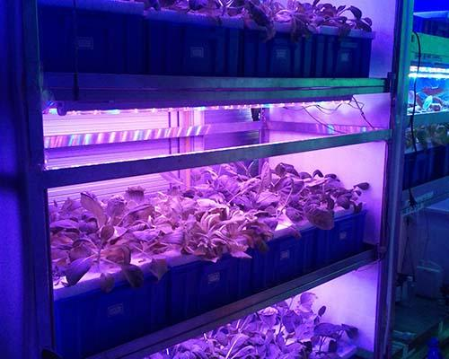 Learnew grow led from China bulk production