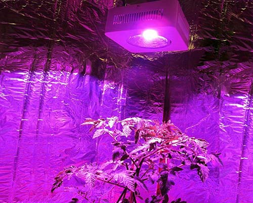 Learnew grow led cob company for promotion-12